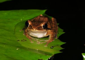 may_28_6968_frog_tadpole