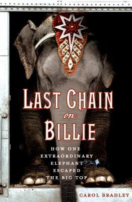 Last Chain on Billie elephants
