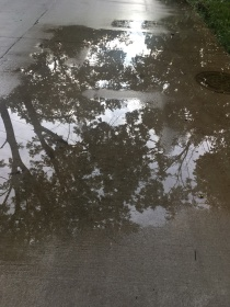 Puddle trees